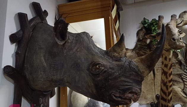 У львівському музеї відреставрували рідкісного носорога