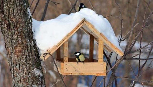 Как правильно кормить птиц зимой
