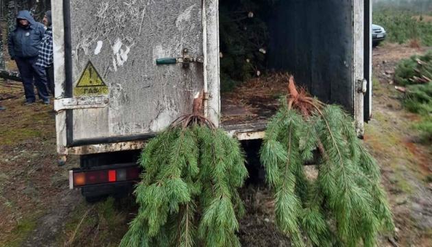 «Новорічні браконьєри» вирубали на Чернігівщині сосен на пів мільйона
