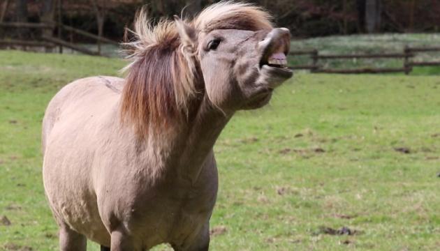 На дунайський острів Єрмаків завезли диких коней із латвійських заповідників