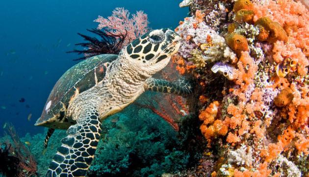 В ООН заявляють, що коралові рифи можуть зникнути до кінця століття