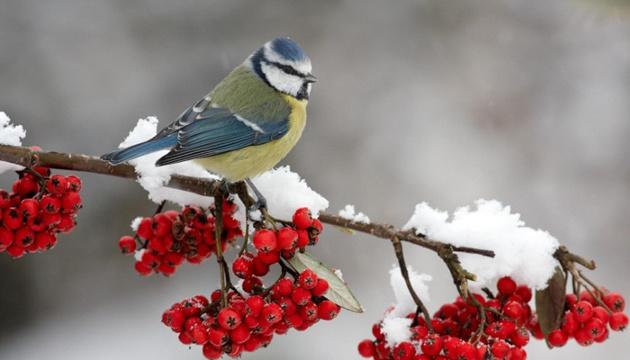 28 декабря: народный календарь и астровестник