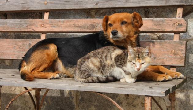 Un centre de protection des animaux sera construit à Kyiv