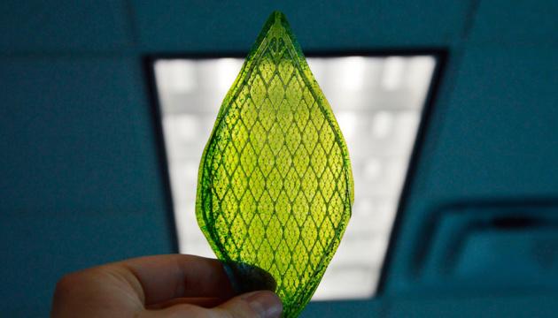 Паливо з фотосинтезу: вчені створили штучний та біонічний листки