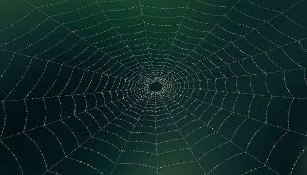 У Китаї виявили п'ять нових видів павуків