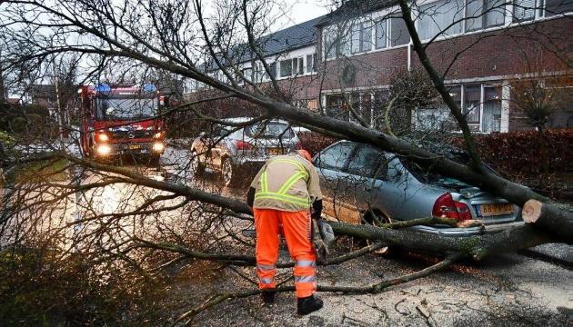 Поваленные деревья и разбитые авто: в Нидерландах обрушился шторм «Белла»