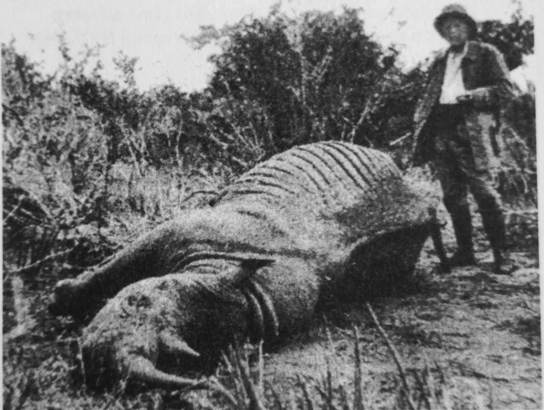 Владислав Городецький пыд час сафары із впольованим носорогом