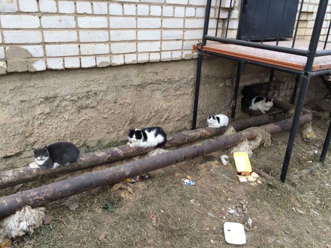 Коти гріють труби, щоб людям було тепор