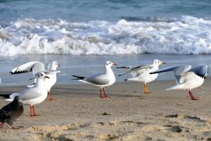 Іспанська школа вирішила перенести уроки на пляж