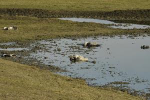 На Херсонщине экоинспекторы проверяют агропредприятие из-за гибели серых журавлей