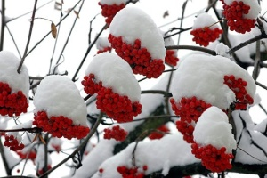 20 січня: народний календар і астровісник