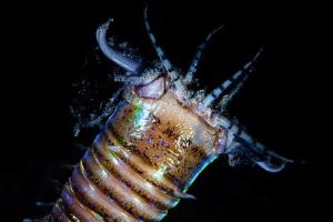Ученые реконструировали логово древнего гигантского червя