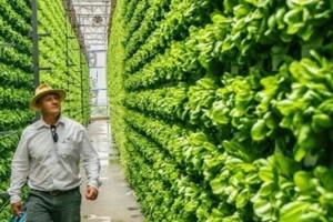 В Украине запустят пилотный проект по выращиванию овощей на «вертикальных полях»
