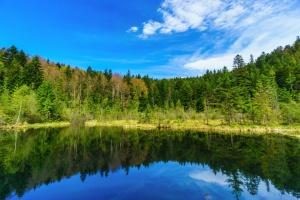 Троллеи и глемпинг: чем «Сколевские Бескиды» будут привлекать туристов