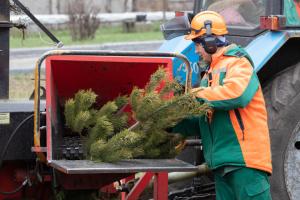 По каким адресам в Киеве еще можно «донести» на утилизацию новогодние елки
