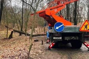 В Киеве сильный ветер поломал ветки и повалил деревья в парках