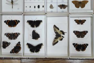 Le Musée d'histoire locale de Zhytomyr s'est vu offrir une collection d'insectes