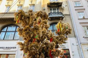 リヴィウ市内に特大ジードゥフ設置 クリスマスのシンボル