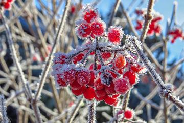 L'arrivée d'une vague de grand froid est attendue en Ukraine