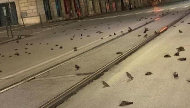 У Римі загинули сотні птахів через запуск новорічних феєрверків