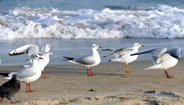 Испанская школа решила перенести уроки на пляж