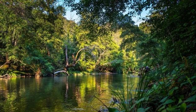 Амазонские леса могут исчезнуть до 2064 года - ученые