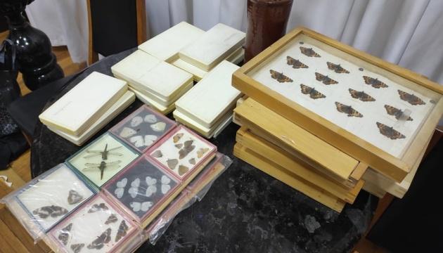 Житомирському краєзнавчому музею передали колекцію комах