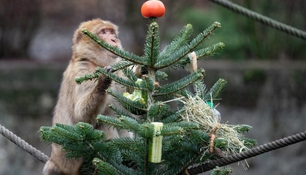 Київський зоопарк просить не приносити їм ялинки