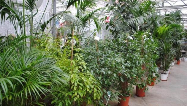 Винайшли портативний пристрій, що вимірює рівень стресу у рослин