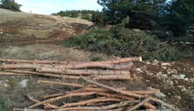 Оккупанты вырубают лес на Ай-Петри