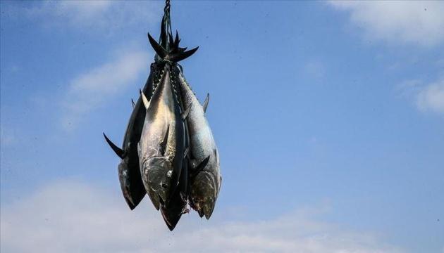 В Японии двухсоткилограммового тунца продали за $202 тысячи