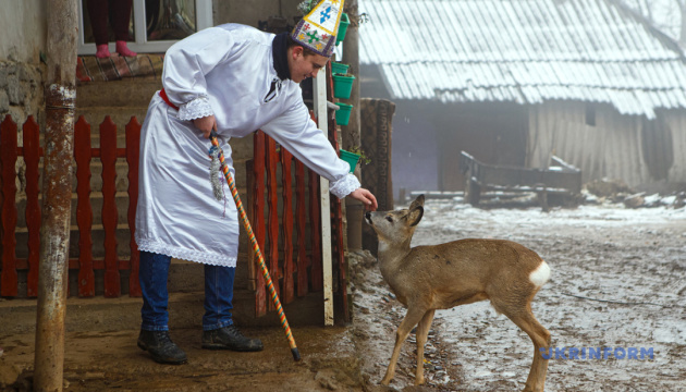 Туманное Рождество, сакральная реставрация и прирученная косуля