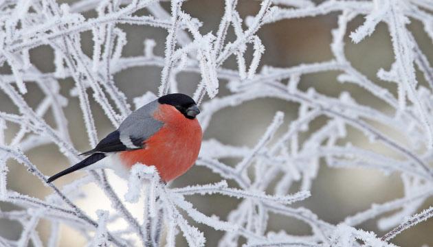 16 січня: народний календар і астровісник