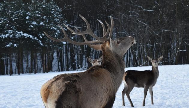 Як проводять зимове дозвілля мешканці Галицького нацпарку