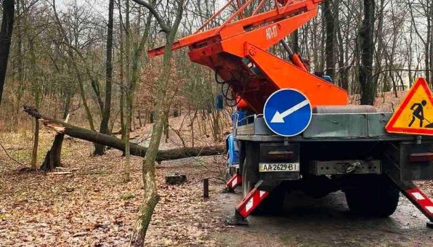 Сильний вітер поламав гілки та повалив дерева у парках Києва