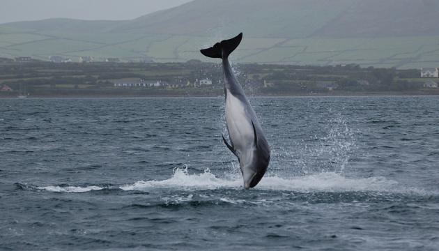В Ірландії запідозрили росіян у причетності до зникнення знаменитого дельфіна