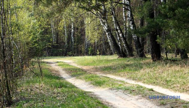 Україні слід збільшувати площі лісів і переводити їх у приватну власність - експерти