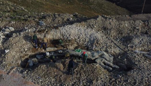 На Лесбосі знайшли скам'яніле дерево, якому 20 мільйонів років