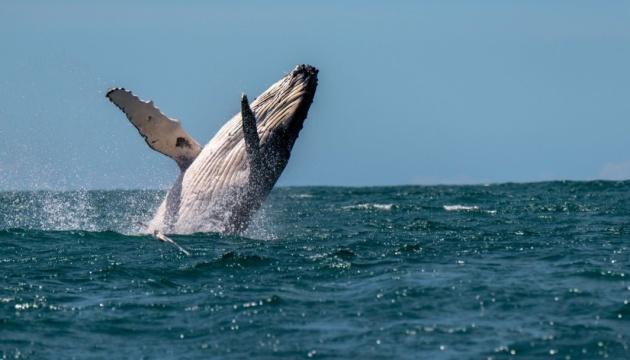 Канада со спутника будет следить за китами в океане