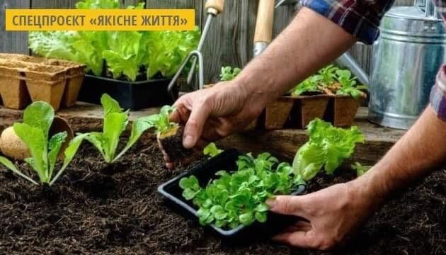 Салат і шпинат: корисні властивості. Інфографіка
