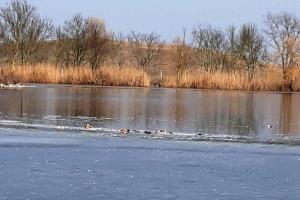 Загибель птахів у Асканії: стали відомі результати перших досліджень