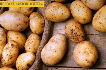 Seleccionistas ucranianos crean una variedad de patata con un rendimiento de unas 100 t/ha