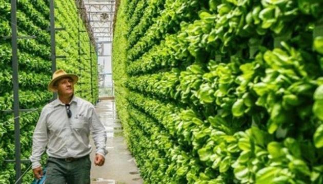 В Україні запустять пілотний проєкт із вирощування овочів на «вертикальних полях»