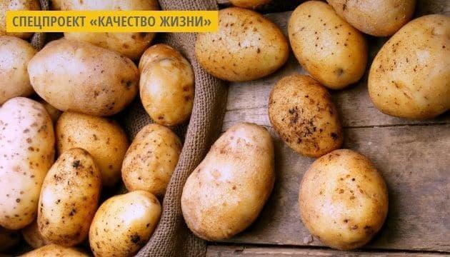 Украинские селекционеры создали сорт картофеля с урожайностью около 100 т/га