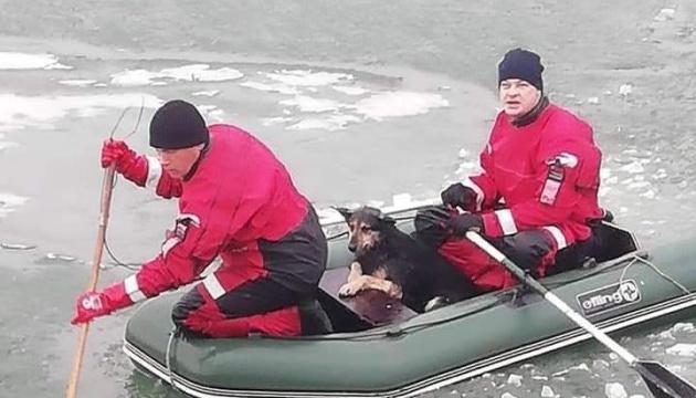 У Маріуполі врятували 7 собак, які опинилися на крижині за 300 метрів від берега