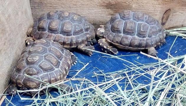 В Винницком зоопарке появились редкие черепахи