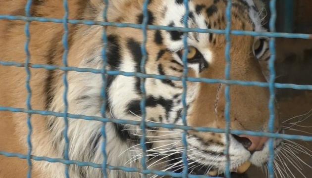 У зоопарку на Чернігівщині тигр загриз чоловіка