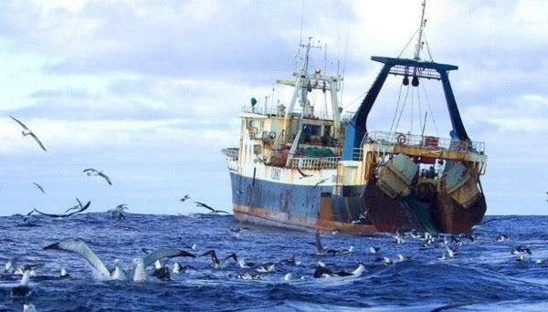 Ucrania exporta más de 6.000 toneladas de pescado y otros recursos biológicos acuáticos