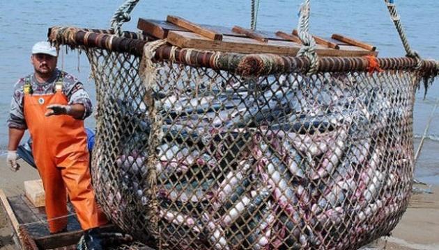 Рекордно зросло споживання риби в Україні