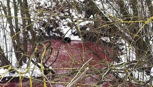 Ріка крові: на Прикарпатті скотобійня незаконно зливала відходи